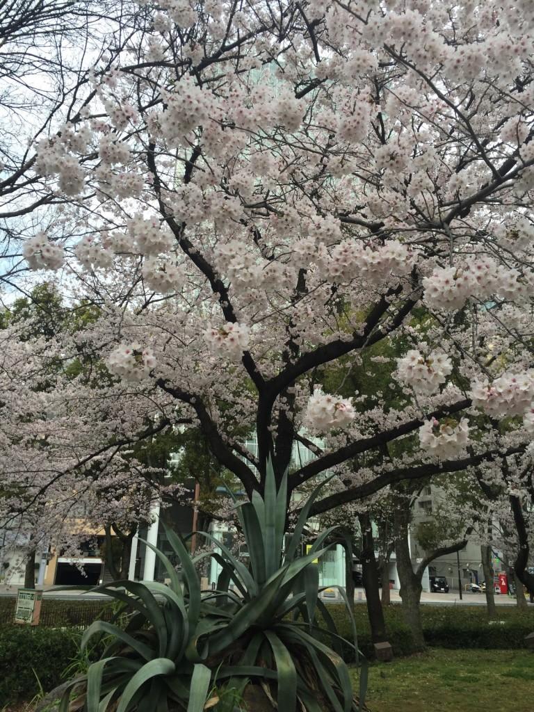 春は唐突に&辛口に始まる